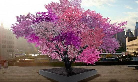 40 видов фруктов на одном дереве